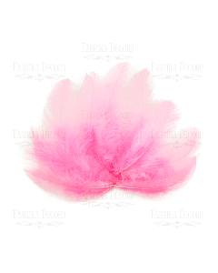 Dekorativno perje - mini - Bright pink - 5-12cm - 10 kos