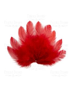 Dekorativno perje - mini - Red - 5-12cm - 10 kos