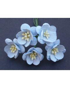 Češnjevi cvetovi - baby modri - 25mm - 50 kos