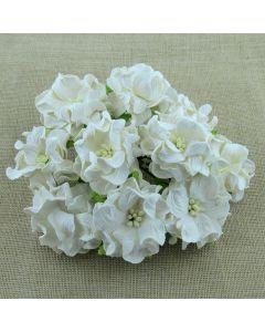 Gardenije - bele - 60mm - 5 kos
