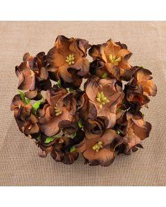 Gardenije - čokoladno rjave - 35mm - 5 kos