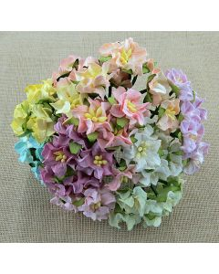 Gardenije - mini - mix pastelne - 25mm - 50 kos